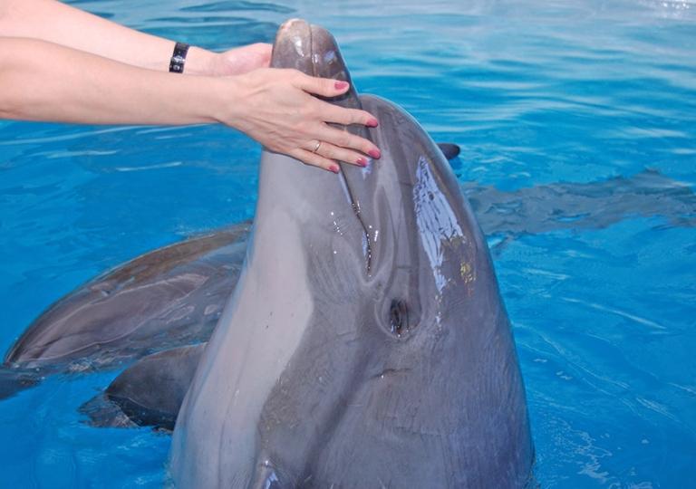 Наши дельфины_1