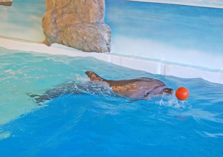 Наши дельфины_2